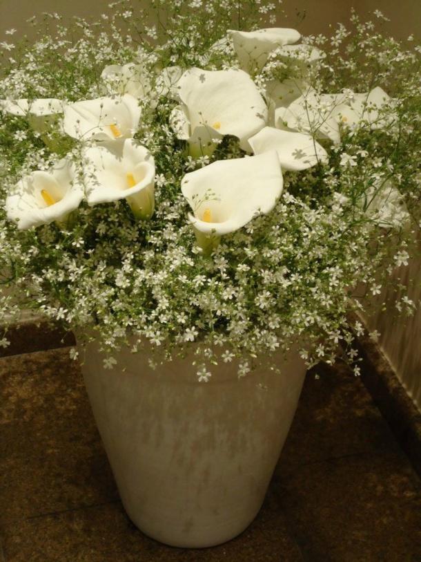 flores lotus